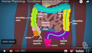 Button to you tube the Colon