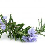 Aromatherapy Rosemary