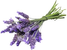 Aromatherapy Lavender First Aid